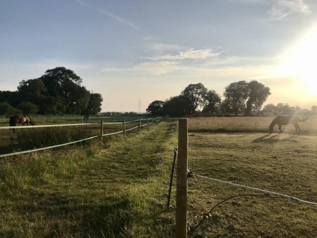 Fields at dusk at Hill Farm Equestrian